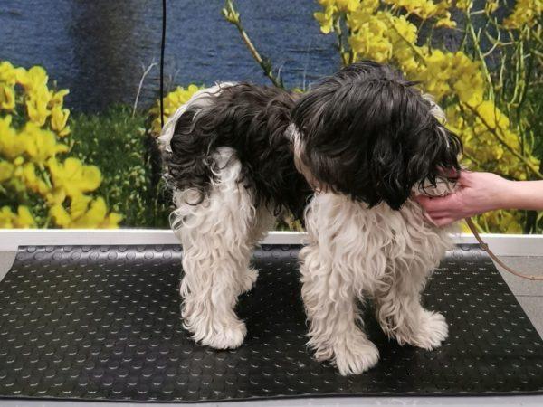 Sterilisatie hond